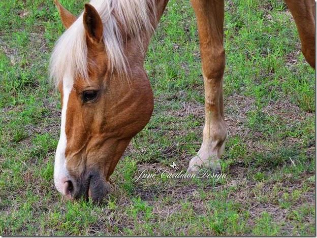 Horse_Closeup