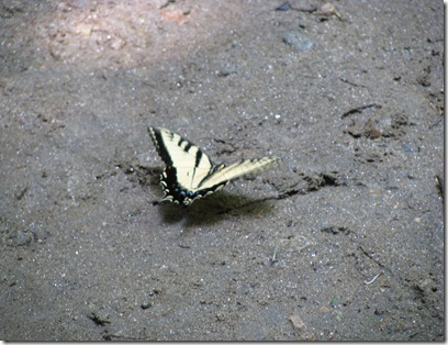 Butterfly at Waterfall