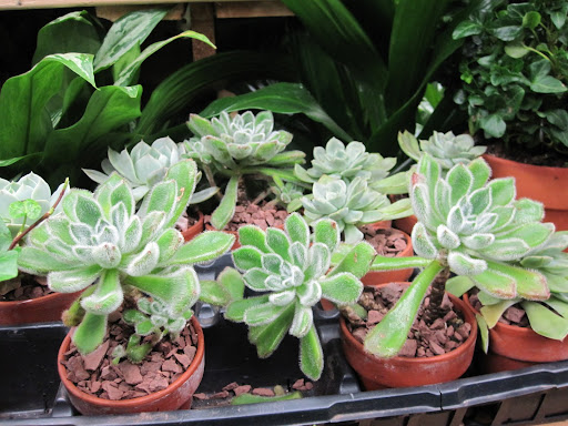 There are also small potted plants that can be found throughout the store.