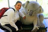 Cuddling With A Slightly Larger Koala - Phillip Island, Australia