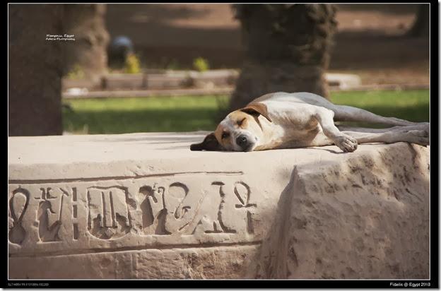 Egypt Day 11_03-27