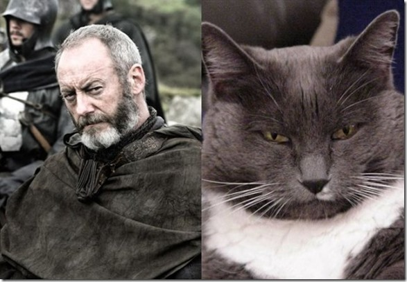 cats-game-thrones-6