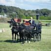 giostra dei cavalli 071.jpg