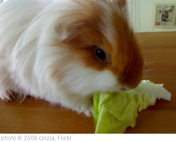 'I love lettuce' photo (c) 2008, cjnzja - license: http://creativecommons.org/licenses/by-nd/2.0/