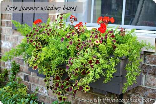 asparagus fern coleus window boxes