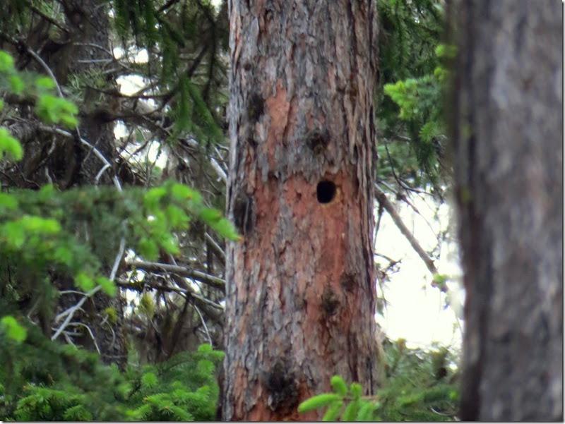 Nest Hole 1