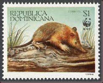 Amazing Pictures of Animals, photo, Nature exotic, funny, incredibel, Zoo, Solenodon, Mammalia, Alex (19)