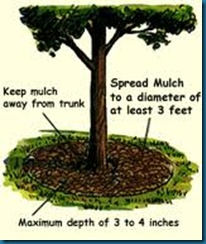 mulch for trees