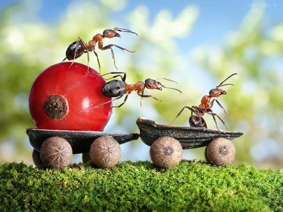 Life-of-Ants-Andrey-Pavlov-32