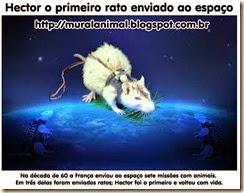 hector-rato-espaco4