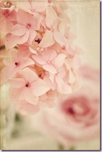 nude flowers11
