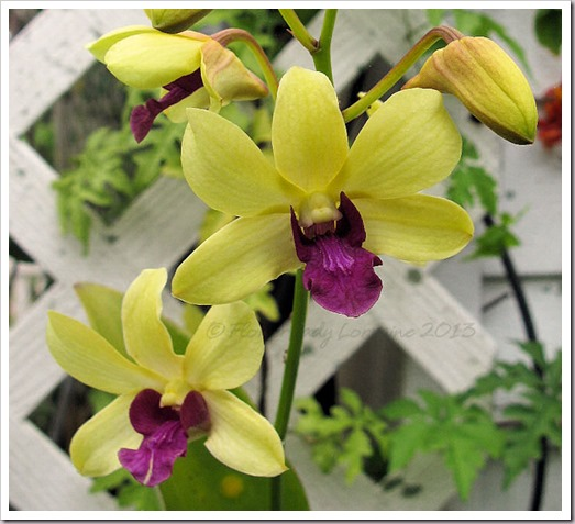 04-29-d-orchids