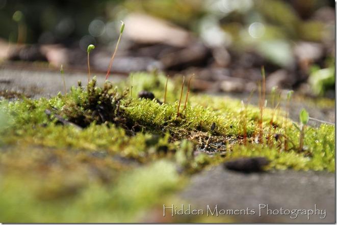 Monster Moss