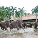 Бали. Сафари на слонах 8.jpg