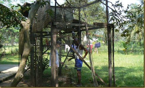 Jackoo fletcher cage