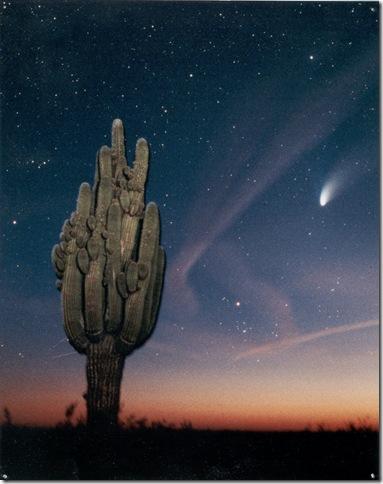 HB Big Saguaro