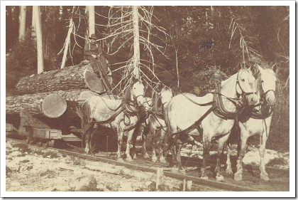 Horse drawn rail cart on Whidbey Island