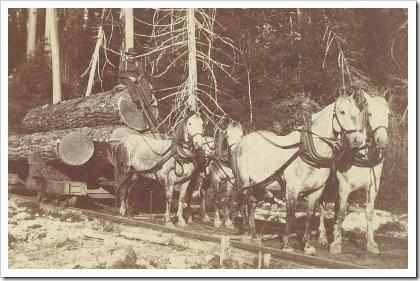 Horse drawn rail cart on Whidbey Island