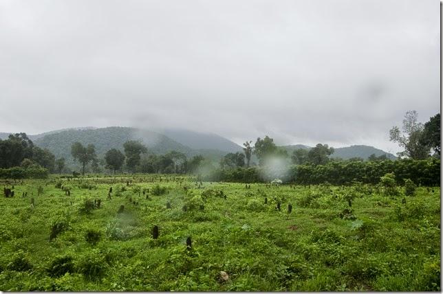 RazingForest