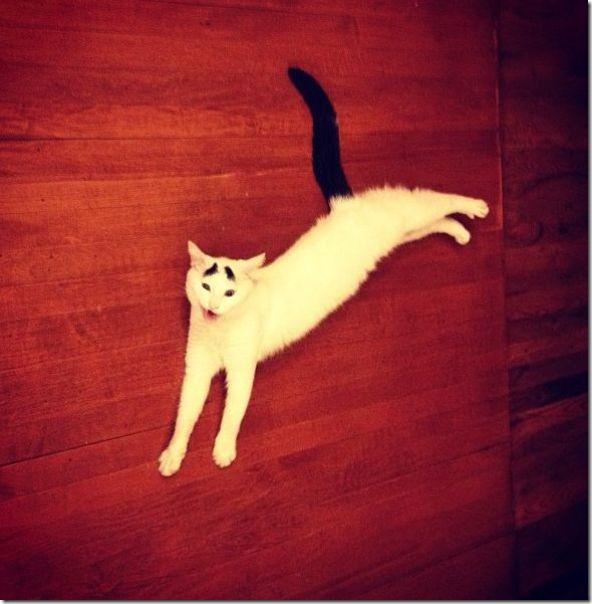 white-cat-eyebrows-22