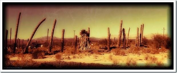 150102_DesertCenterPalms