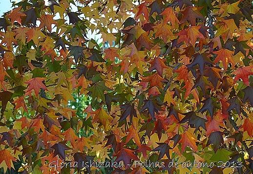 16  Glória Ishizaka - Folhas de Outono 2013