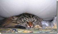 gato 34 (11)