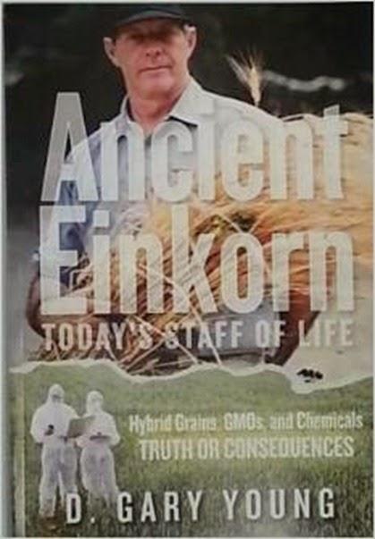 ancient einkorn