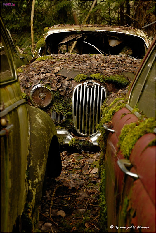 cars_011.jpg