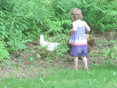 2012 Memorial Day Bella with her chickens5