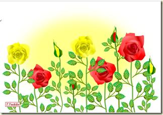 5月・赤・黄ばら