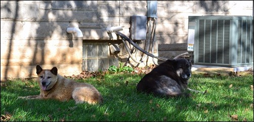 Kodi and Sadie in the shade