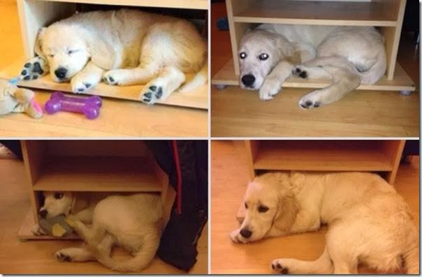 Antes e Depois de Animais de Estimação (13)
