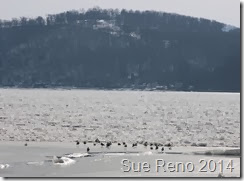 Ice on the Susquehanna River, 2/2014, by Sue Reno, Image 2