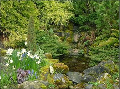 waterfall wild gdn