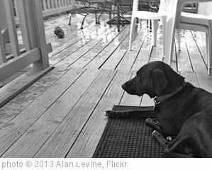 'Watching the Rain' photo (c) 2013, Alan Levine - license: http://creativecommons.org/licenses/by-sa/2.0/