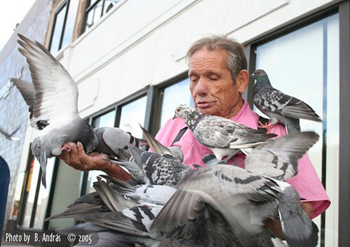 pigeon_man_of_Lincoln_Square_Chicago