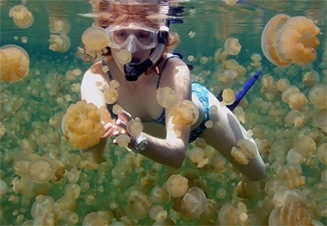 south-pacific_jellyfish-lake