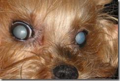Terza età: patologie oculari (2° parte)