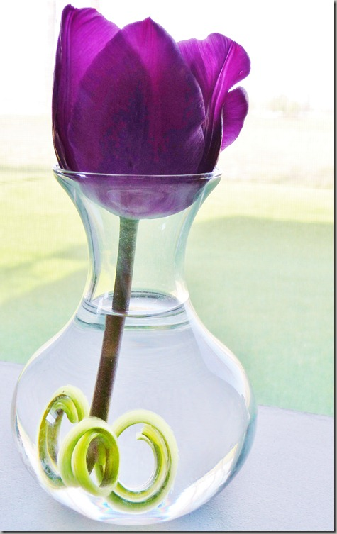 tulip 011