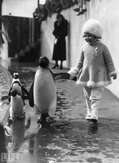 strolling with penguins 1937