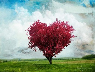Love_tree_Wallpaper_ofdgi