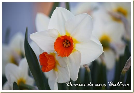 Botanico-1