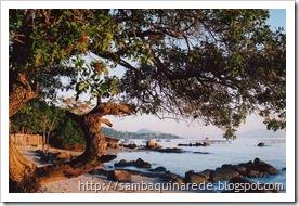 Praia_Sto_Ant_aroeira_img004