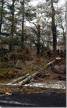 uncool-tree-down