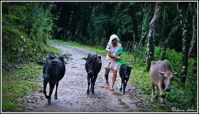 Villager kalasa