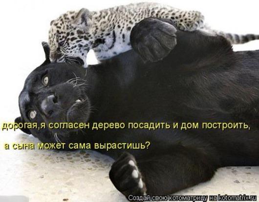 53776340376b837b53835cab1ea_prev