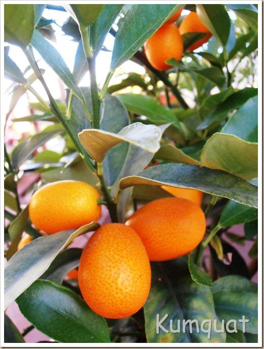 kumquat 3