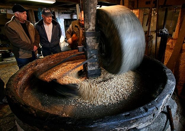 Walnuts being crushed by stone wheel in water powered mill France