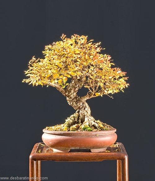 bonsais arvores em miniatura desbaratinando (91)